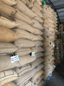 Green coffee warehouse in El Salvador, where labelled lots await the final round of milling and sorting before they are ready for export and roasting