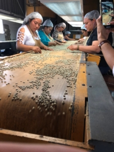 Workers at a milling and processing station in El Salvador hand-sorting green coffee for defects.